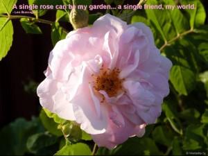 Vaaleanpunaisen ruusun viesti on Victorian sanakirjan mukaan 'armo'.