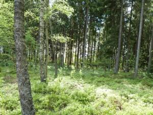 Jos metsään haluat mennä nyt...